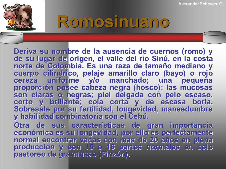 Alexander Echeverri G. Romosinuano Deriva su nombre de la ausencia de cuernos (romo) y de su lugar de origen, el valle del río Sinú, en la costa norte
