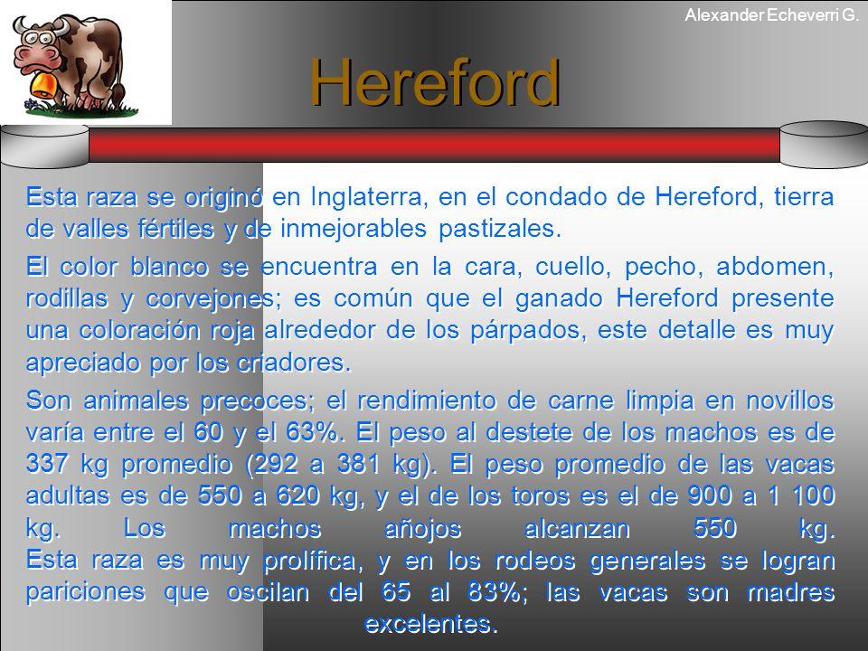Alexander Echeverri G. Hereford Esta raza se originó en Inglaterra, en el condado de Hereford, tierra de valles fértiles y de inmejorables pastizales.