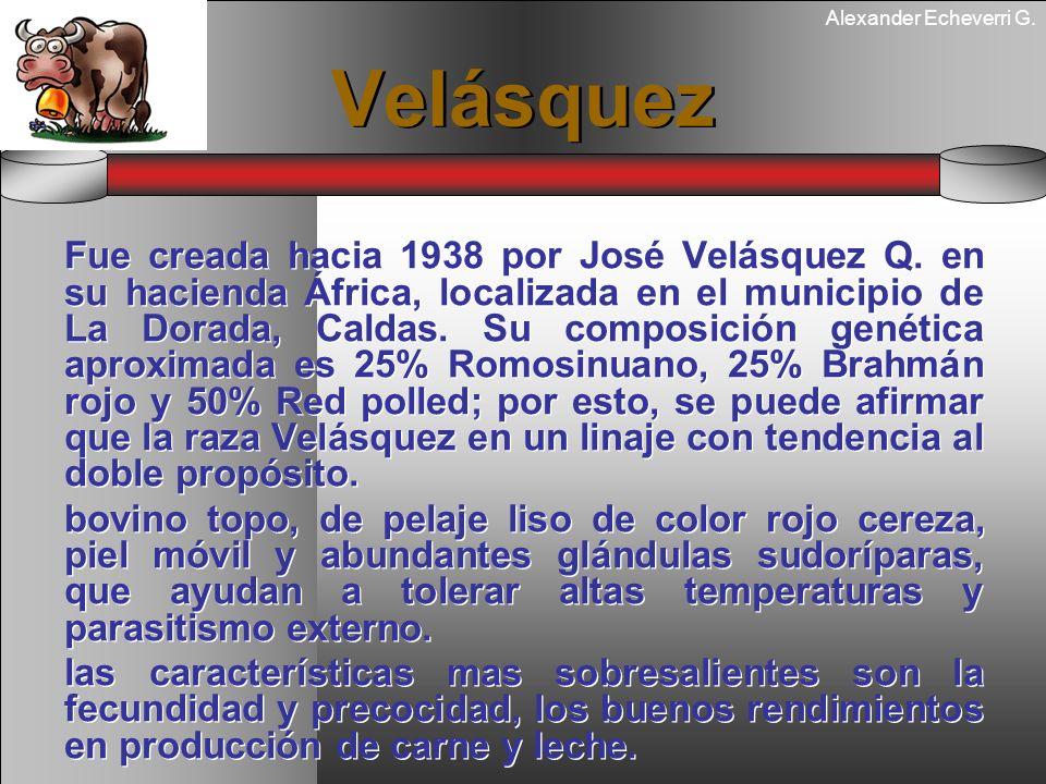 Alexander Echeverri G. Velásquez Fue creada hacia 1938 por José Velásquez Q. en su hacienda África, localizada en el municipio de La Dorada, Caldas. S