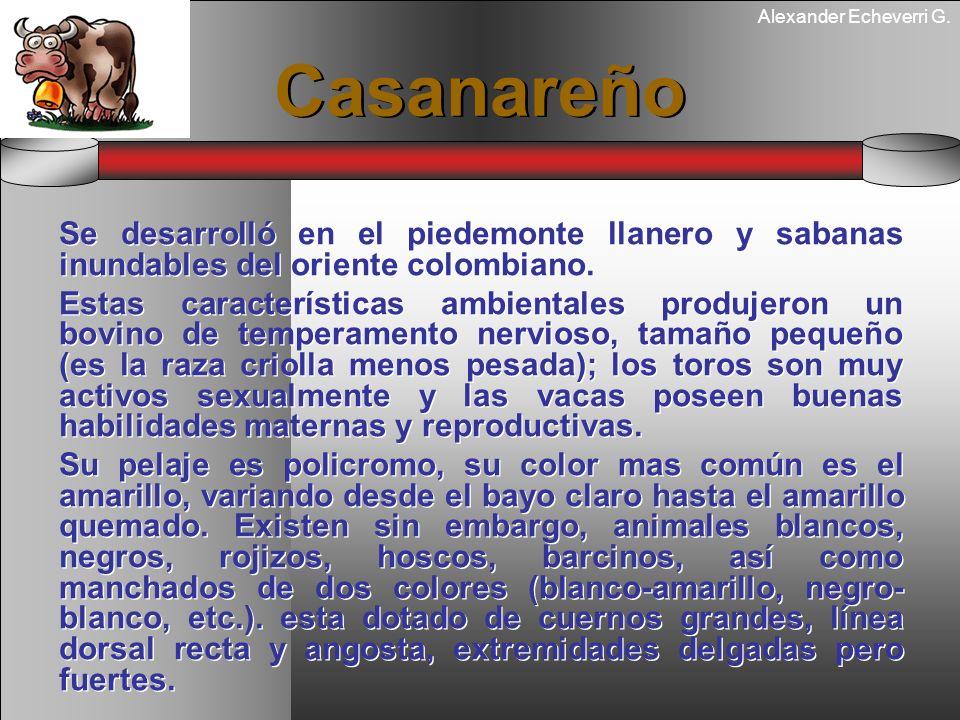 Alexander Echeverri G. Casanareño Se desarrolló en el piedemonte llanero y sabanas inundables del oriente colombiano. Estas características ambientale