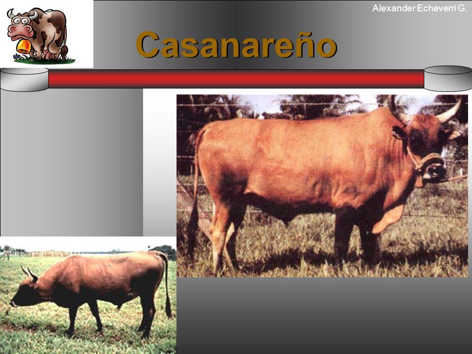 Alexander Echeverri G. Casanareño