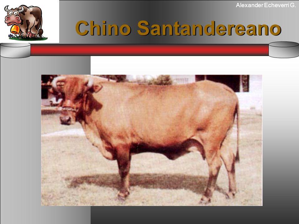 Alexander Echeverri G. Chino Santandereano