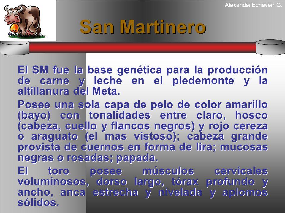 Alexander Echeverri G. San Martinero El SM fue la base genética para la producción de carne y leche en el piedemonte y la altillanura del Meta. Posee