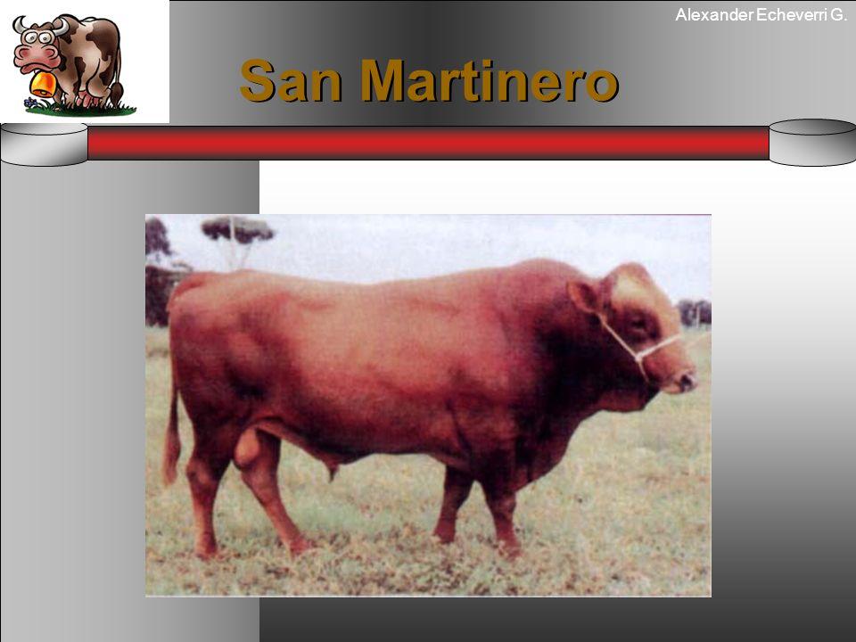 Alexander Echeverri G. San Martinero