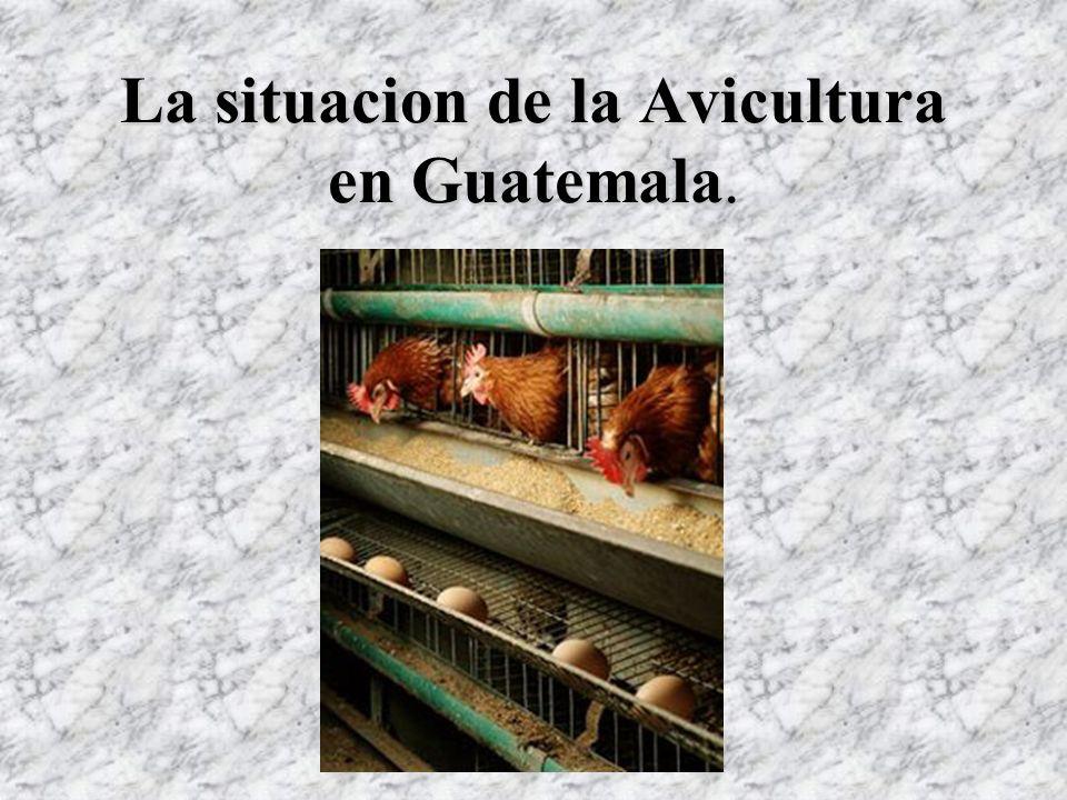 La situacion de la Avicultura en Guatemala La situacion de la Avicultura en Guatemala.