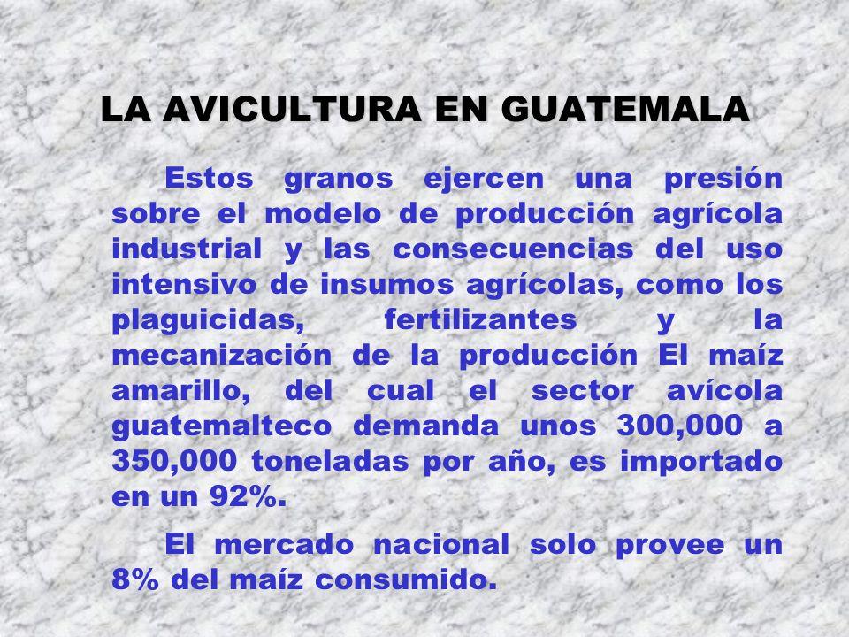 LA AVICULTURA EN GUATEMALA Estos granos ejercen una presión sobre el modelo de producción agrícola industrial y las consecuencias del uso intensivo de