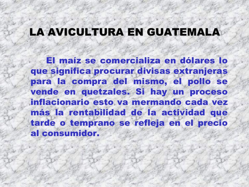 LA AVICULTURA EN GUATEMALA El maíz se comercializa en dólares lo que significa procurar divisas extranjeras para la compra del mismo, el pollo se vend