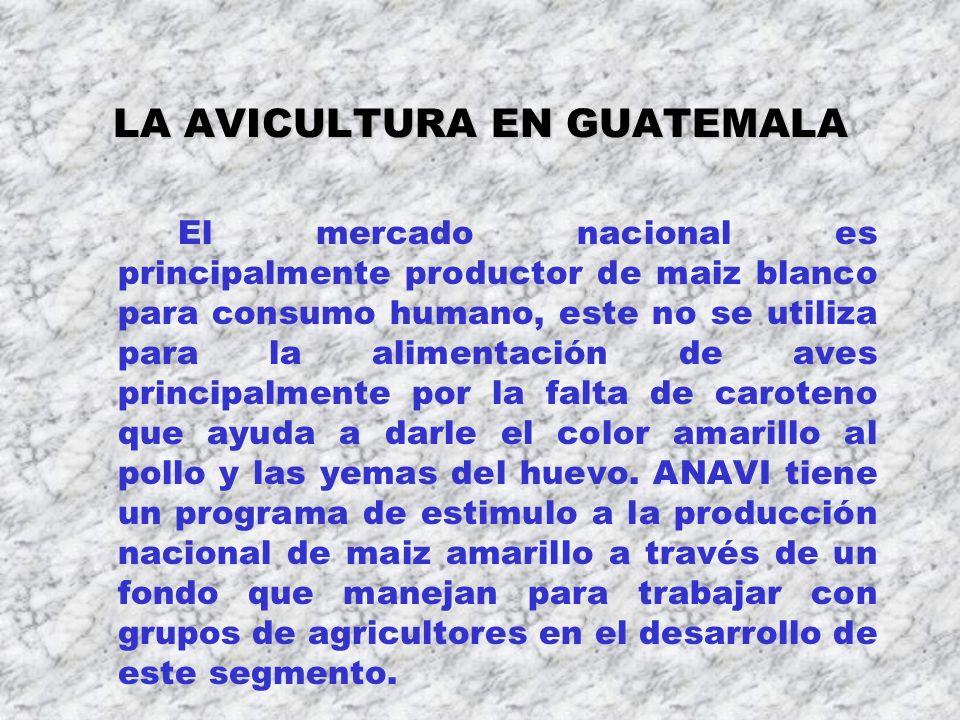 LA AVICULTURA EN GUATEMALA El mercado nacional es principalmente productor de maiz blanco para consumo humano, este no se utiliza para la alimentación