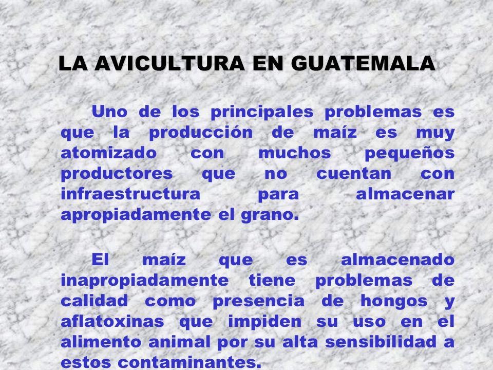 LA AVICULTURA EN GUATEMALA Uno de los principales problemas es que la producción de maíz es muy atomizado con muchos pequeños productores que no cuent