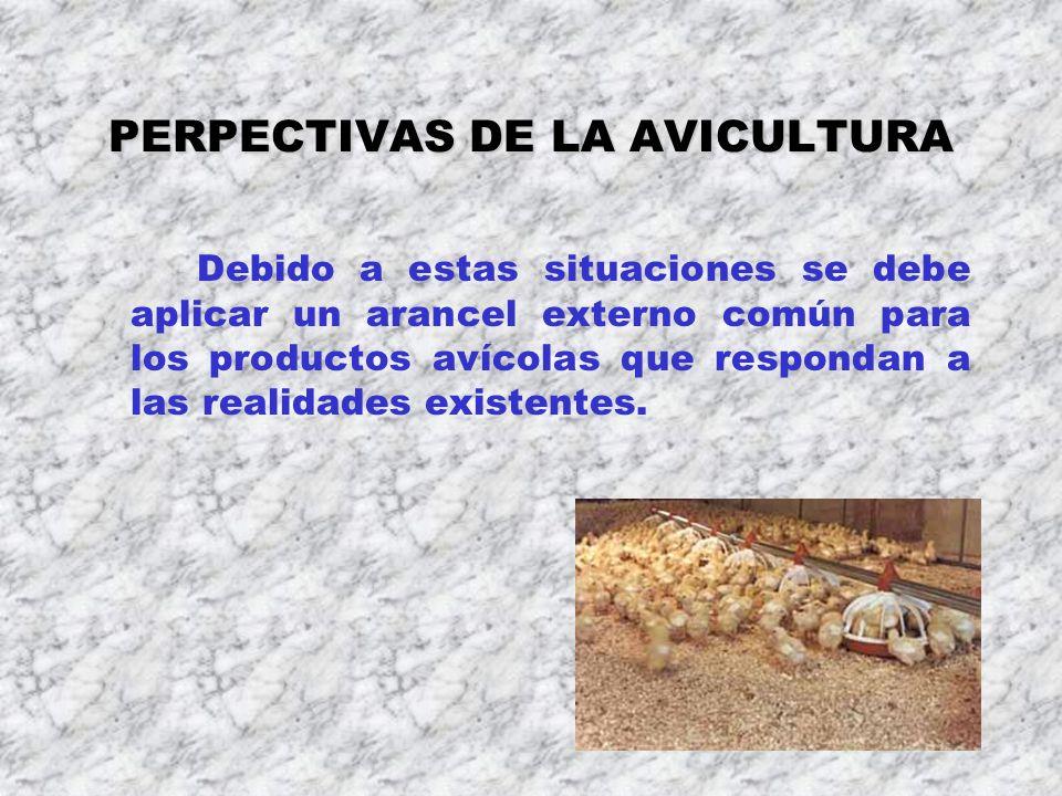 PERPECTIVAS DE LA AVICULTURA Debido a estas situaciones se debe aplicar un arancel externo común para los productos avícolas que respondan a las reali
