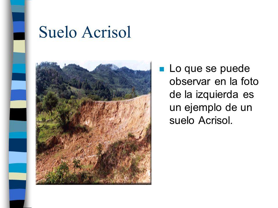 Suelo Acrisol n Lo que se puede observar en la foto de la izquierda es un ejemplo de un suelo Acrisol.