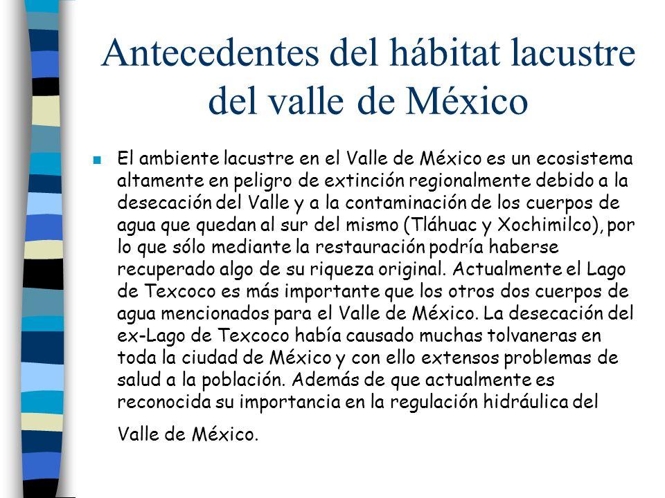 Antecedentes del hábitat lacustre del valle de México n El ambiente lacustre en el Valle de México es un ecosistema altamente en peligro de extinción