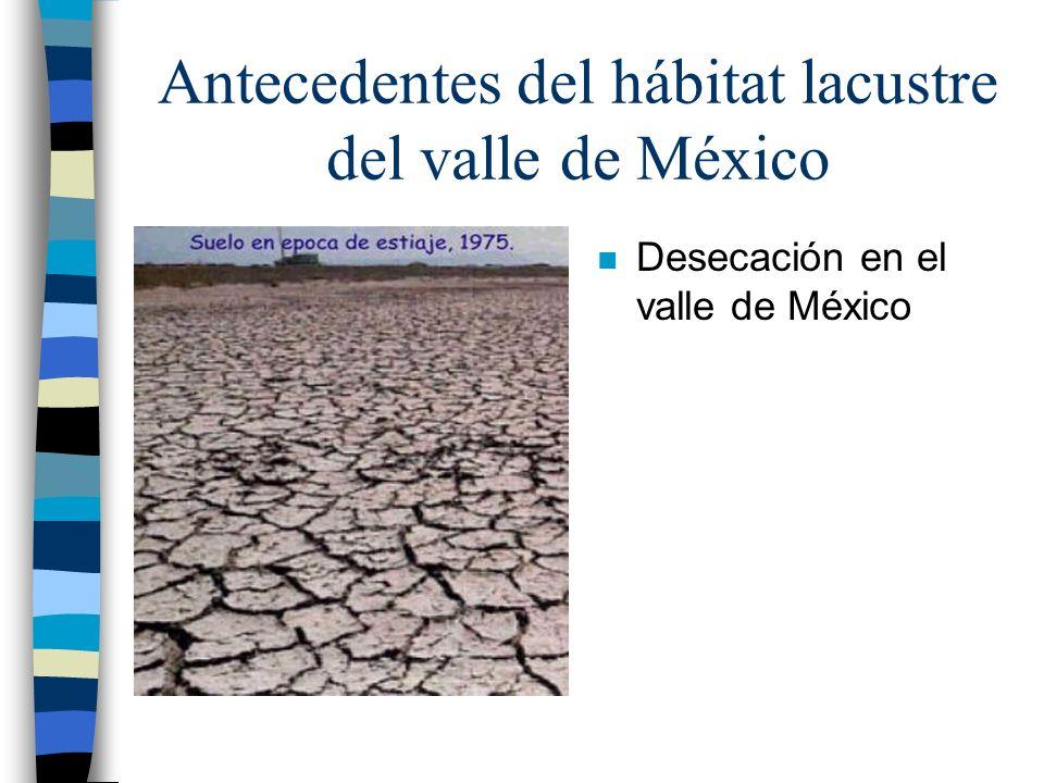 Antecedentes del hábitat lacustre del valle de México n Desecación en el valle de México