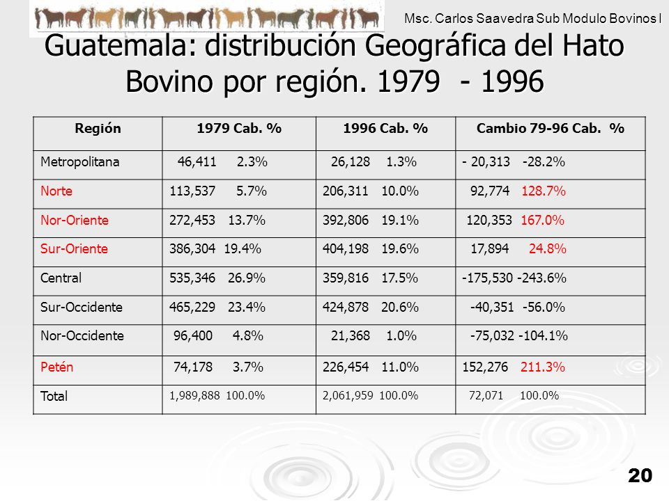 Msc. Carlos Saavedra Sub Modulo Bovinos I 20 Guatemala: distribución Geográfica del Hato Bovino por región. 1979 - 1996 Región1979 Cab. %1996 Cab. %Ca