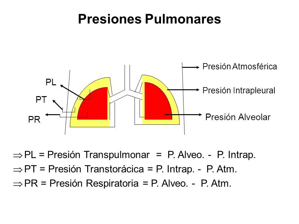 Presiones Pulmonares PL = Presión Transpulmonar = P. Alveo. - P. Intrap. PT = Presión Transtorácica = P. Intrap. - P. Atm. PR = Presión Respiratoria =