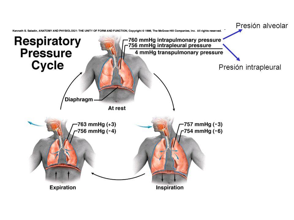 Presión alveolar Presión intrapleural