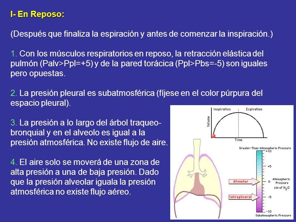 I- En Reposo: (Después que finaliza la espiración y antes de comenzar la inspiración.) 1. Con los músculos respiratorios en reposo, la retracción elás