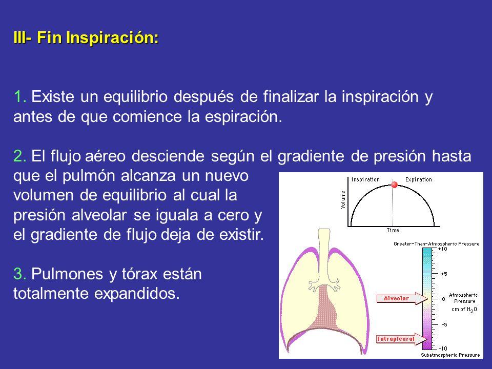 III- Fin Inspiración: 1. Existe un equilibrio después de finalizar la inspiración y antes de que comience la espiración. 2. El flujo aéreo desciende s