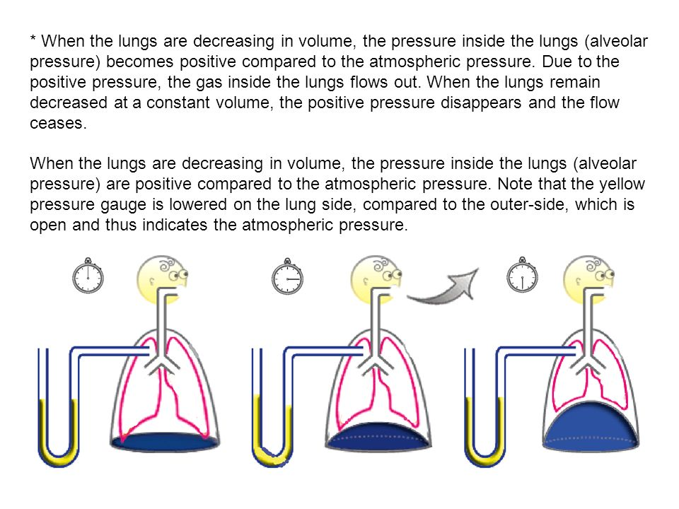 * When the lungs are decreasing in volume, the pressure inside the lungs (alveolar pressure) becomes positive compared to the atmospheric pressure. Du