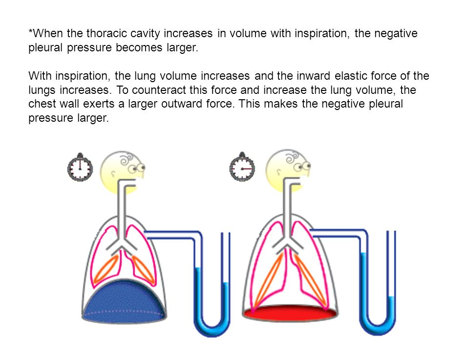 *When the thoracic cavity increases in volume with inspiration, the negative pleural pressure becomes larger. With inspiration, the lung volume increa