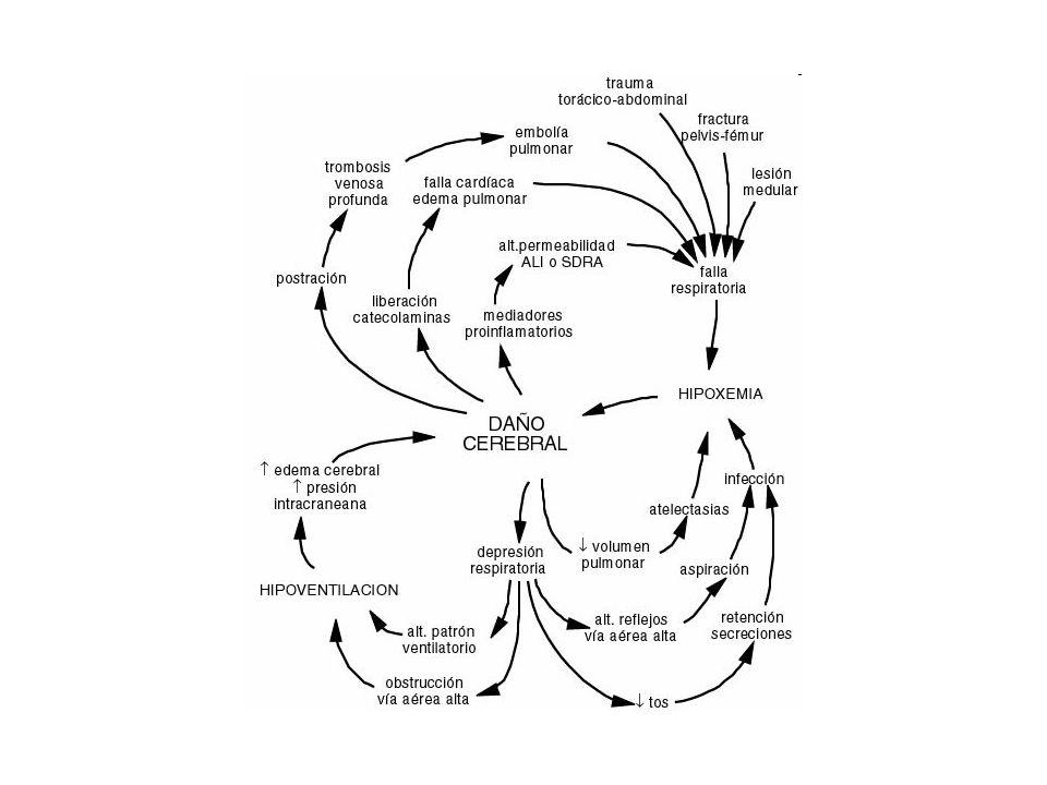 La función primordial de los pulmones consiste en garantizar un intercambio de gases adecuado para las necesidades del organismo, de forma que el aporte de O 2 necesario para las demandas metabólicas de los tejidos y la eliminación de CO 2 de los mismos se lleven a cabo correctamente de forma simultánea.