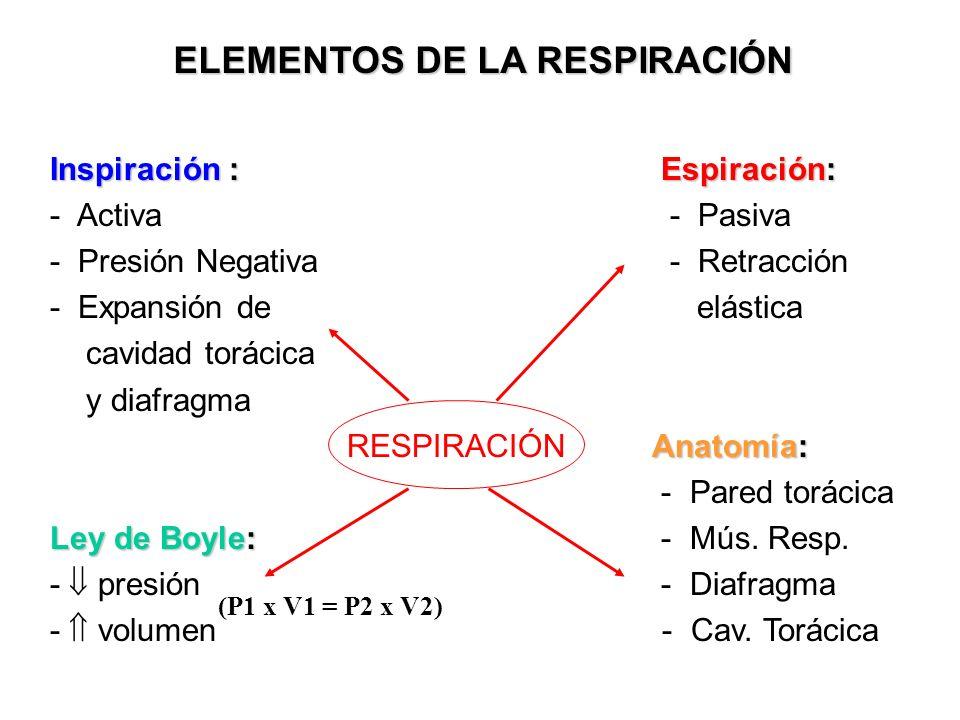 Inspiración : Espiración: - Activa - Pasiva - Presión Negativa - Retracción - Expansión de elástica cavidad torácica y diafragma Anatomía: RESPIRACIÓN