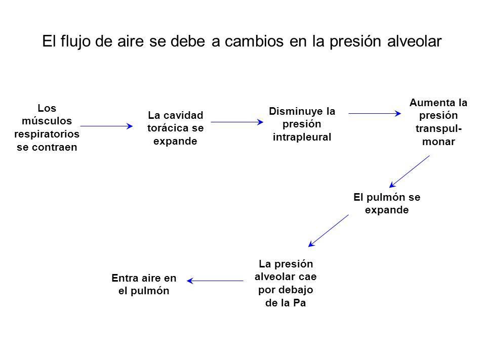 El flujo de aire se debe a cambios en la presión alveolar Los músculos respiratorios se contraen La cavidad torácica se expande La presión alveolar ca