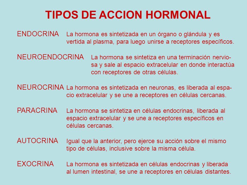 TIPOS DE ACCION HORMONAL ENDOCRINA La hormona es sintetizada en un órgano o glándula y es vertida al plasma, para luego unirse a receptores específico