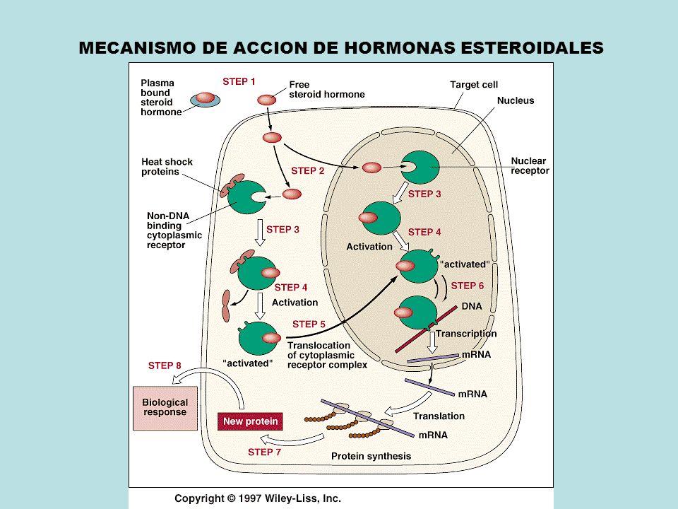 MECANISMO DE ACCION DE HORMONAS ESTEROIDALES