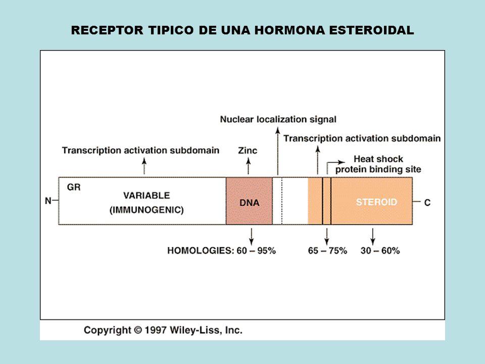 RECEPTOR TIPICO DE UNA HORMONA ESTEROIDAL