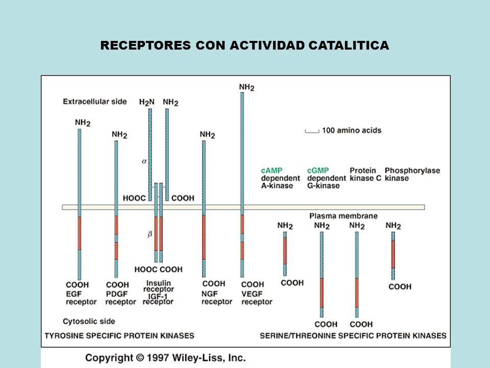 RECEPTORES CON ACTIVIDAD CATALITICA