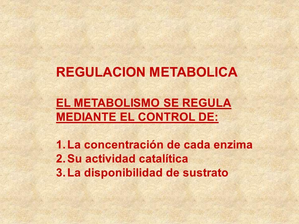 REGULACION METABOLICA EL METABOLISMO SE REGULA MEDIANTE EL CONTROL DE: 1.La concentración de cada enzima 2.Su actividad catalítica 3.La disponibilidad