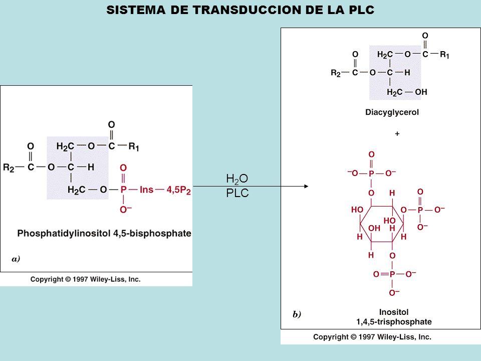 SISTEMA DE TRANSDUCCION DE LA PLC H 2 O PLC