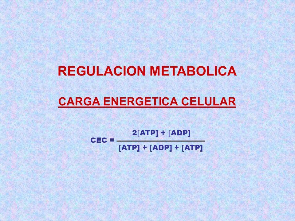 REGULACION METABOLICA CARGA ENERGETICA CELULAR CEC = 2 ATP] + ADP] ATP] + ADP] + ATP]