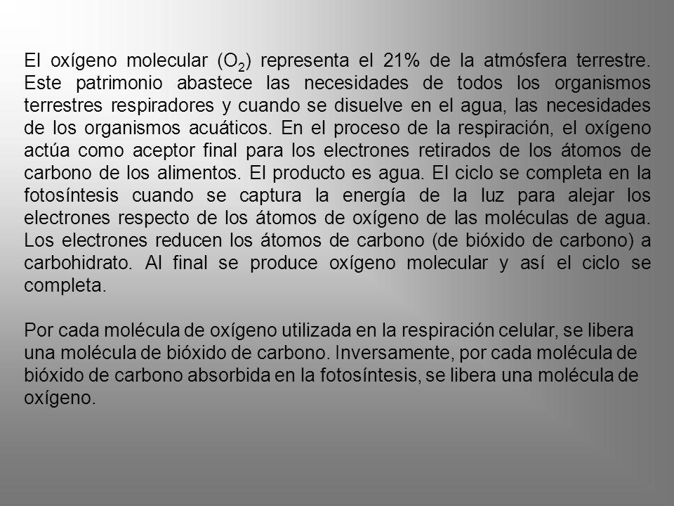 El oxígeno molecular (O 2 ) representa el 21% de la atmósfera terrestre. Este patrimonio abastece las necesidades de todos los organismos terrestres r