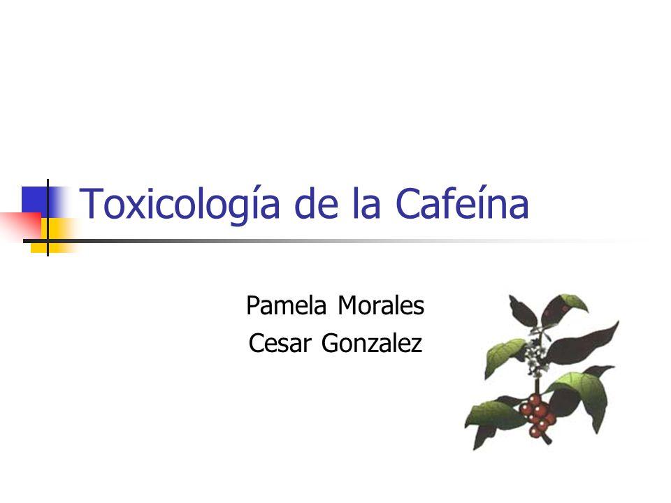 Cafeína La cafeína o teína es un compuesto químico que se encuentra en la naturaleza en las semillas de cafeto (Coffea arabica),de cola (Cola nitida), en las hojas de té (Camellia sinensis) y en la guaraná (Paullinia cupana).
