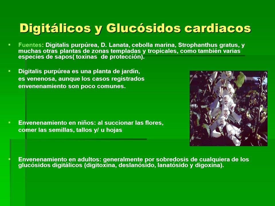 Digitálicos y Glucósidos cardiacos Fuentes: Digitalis purpúrea, D. Lanata, cebolla marina, Strophanthus gratus, y muchas otras plantas de zonas templa