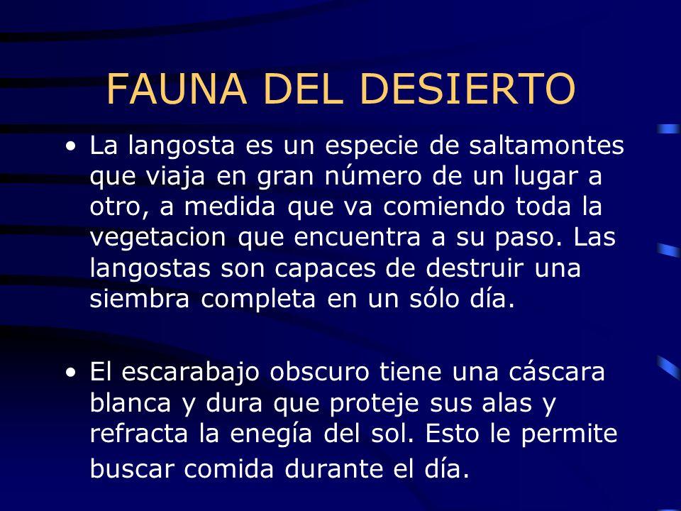 FAUNA DEL DESIERTO La langosta es un especie de saltamontes que viaja en gran número de un lugar a otro, a medida que va comiendo toda la vegetacion q