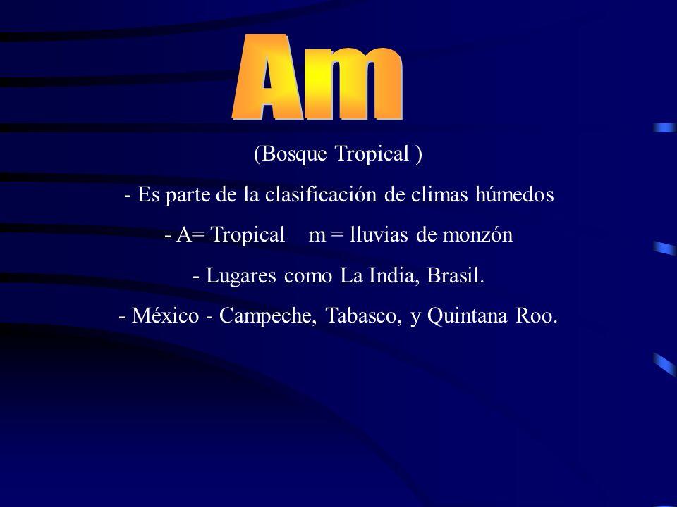 (Bosque Tropical ) - Es parte de la clasificación de climas húmedos - A= Tropical m = lluvias de monzón - Lugares como La India, Brasil. - México - Ca