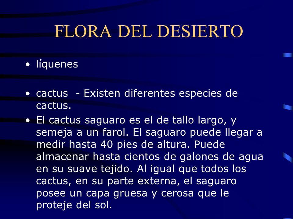 FLORA DEL DESIERTO líquenes cactus - Existen diferentes especies de cactus. El cactus saguaro es el de tallo largo, y semeja a un farol. El saguaro pu