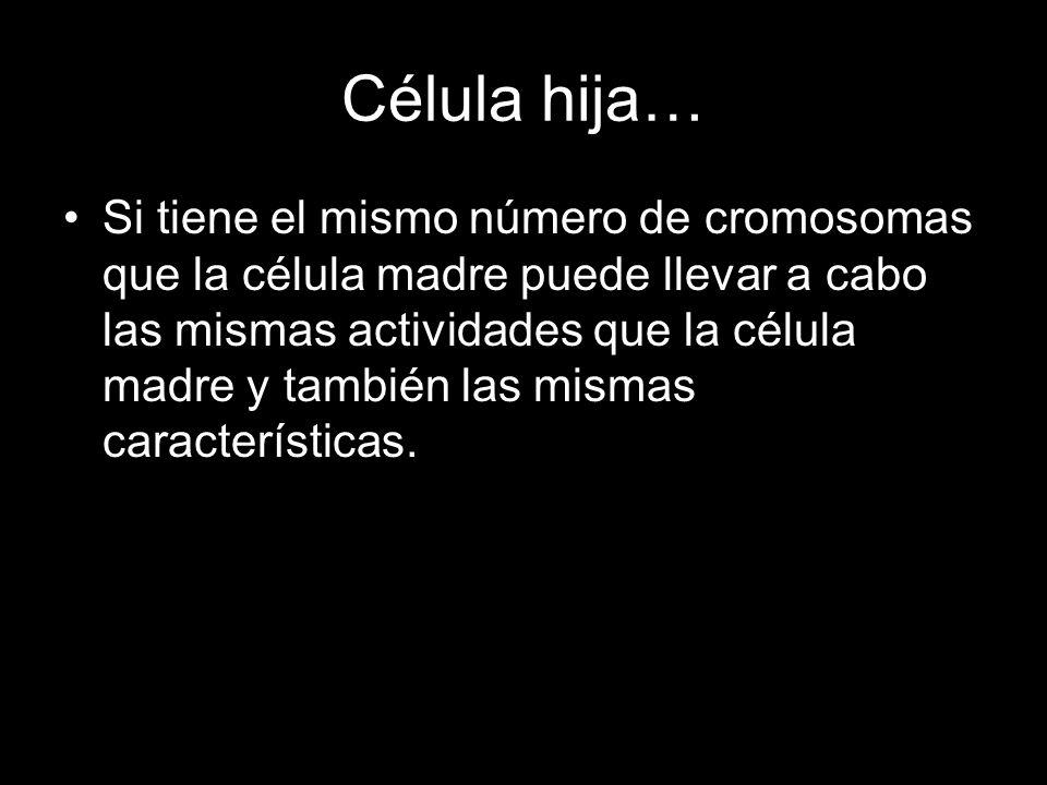 Célula hija… Si tiene el mismo número de cromosomas que la célula madre puede llevar a cabo las mismas actividades que la célula madre y también las m