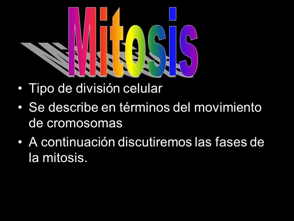 Tipo de división celular Se describe en términos del movimiento de cromosomas A continuación discutiremos las fases de la mitosis.