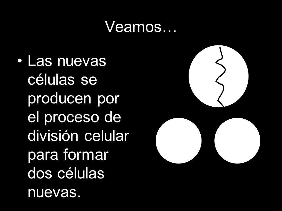 En el proceso… Cuando una célula se divide se le llama célula madre. Citoplasma N