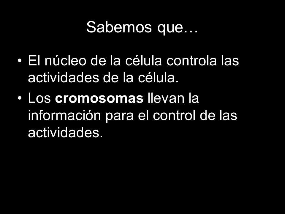 Sabemos que… El núcleo de la célula controla las actividades de la célula. Los cromosomas llevan la información para el control de las actividades.