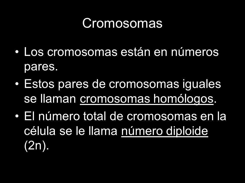 Cromosomas Los cromosomas están en números pares. Estos pares de cromosomas iguales se llaman cromosomas homólogos. El número total de cromosomas en l