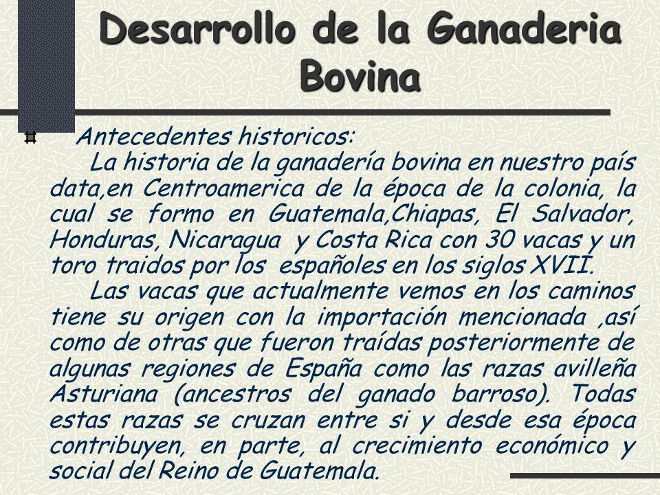 Desarrollo de la Ganadería bovina Los datos historicos localizados nos permiten establecer que en 1900, Guatemala tuvo que abastecer de ganado bovino a los hatos de Mexico y Honduras.