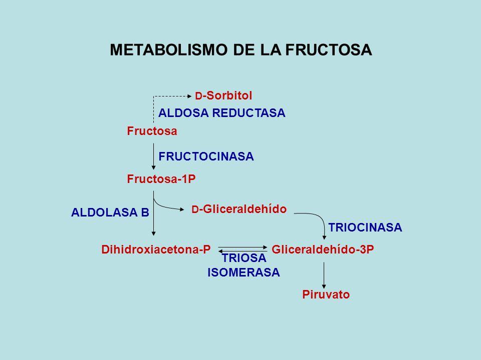 DEFICIENCIA DE ALDOLASA B FIBROSIS Y CIRROSIS HEPATICA (Acumulación de Fru-1P) AST y ALT (Daño hepático) HIPOGLICEMIA (Pi, ATP, Fru-1P) (Inhibición de Glc-6P Isomerasa y Aldolasa A y C) HIPERURICEMIA (AMP por Adenilato Cinasa: degradado a urato)