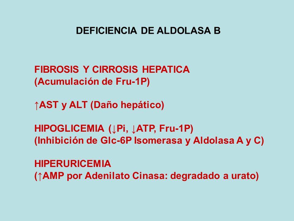 DEFICIENCIA DE ALDOLASA B FIBROSIS Y CIRROSIS HEPATICA (Acumulación de Fru-1P) AST y ALT (Daño hepático) HIPOGLICEMIA (Pi, ATP, Fru-1P) (Inhibición de