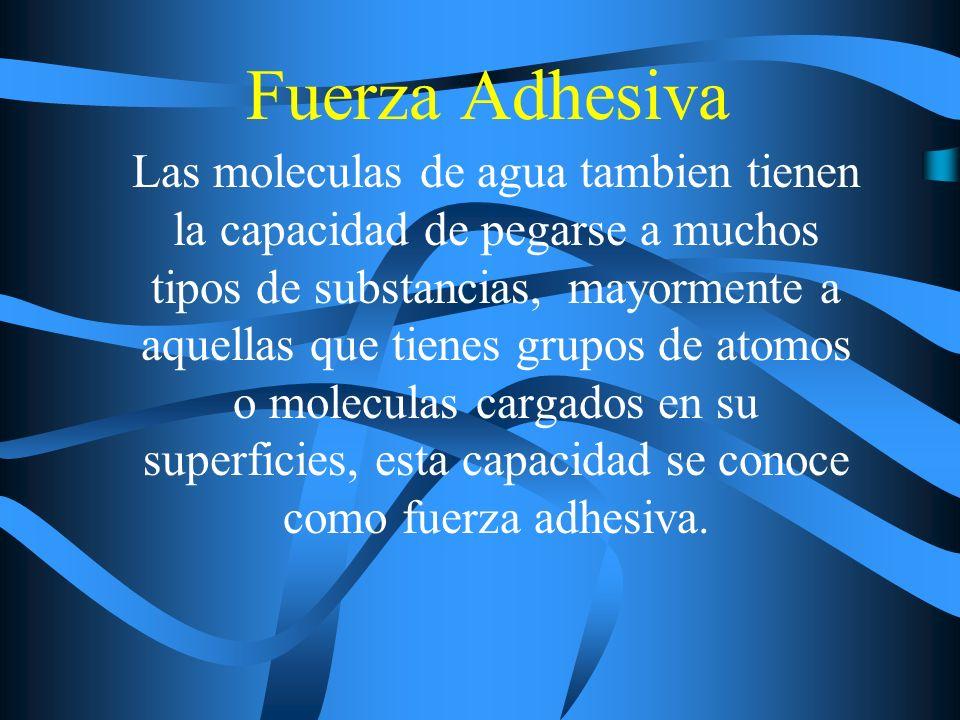 Fuerza Adhesiva Las moleculas de agua tambien tienen la capacidad de pegarse a muchos tipos de substancias, mayormente a aquellas que tienes grupos de atomos o moleculas cargados en su superficies, esta capacidad se conoce como fuerza adhesiva.