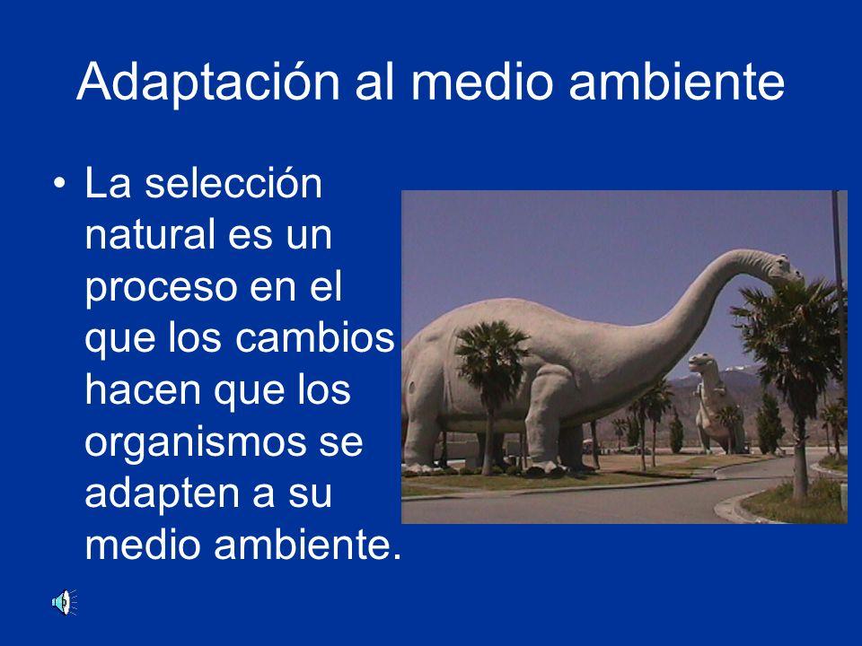 Adaptación al medio ambiente La selección natural es un proceso en el que los cambios hacen que los organismos se adapten a su medio ambiente.
